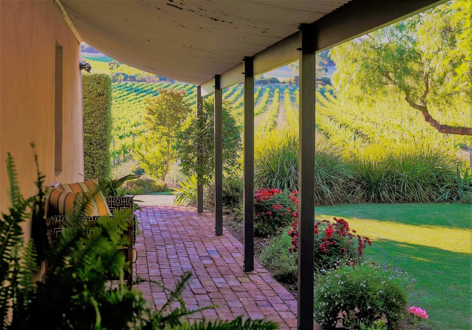 Vineyard views from the front verandah of Seppeltsfield Vineyard Cottage