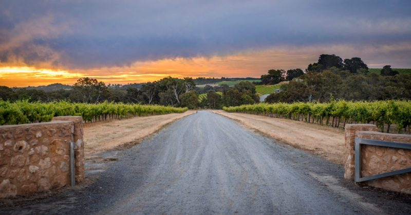 Shottesbrooke Vineyards - McLaren Vale Wine Region