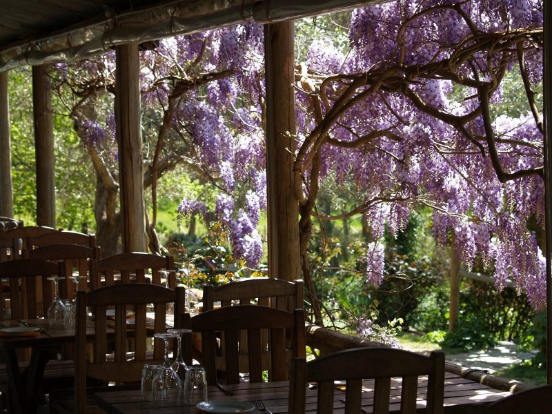 Lunch tables along the verandah with the wisteria in bloom.