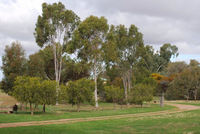 Set in acres of native gardens with ancient river redgums along the creek.