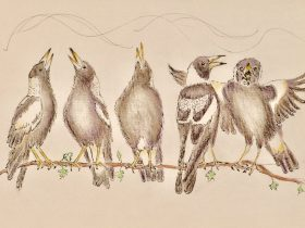 Five songbirds (magpies)