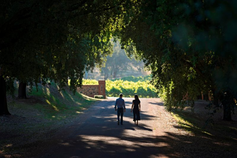 Cork Tree Driveway