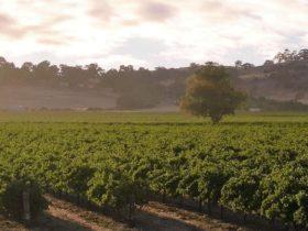Steinborner & Reynolds Vines