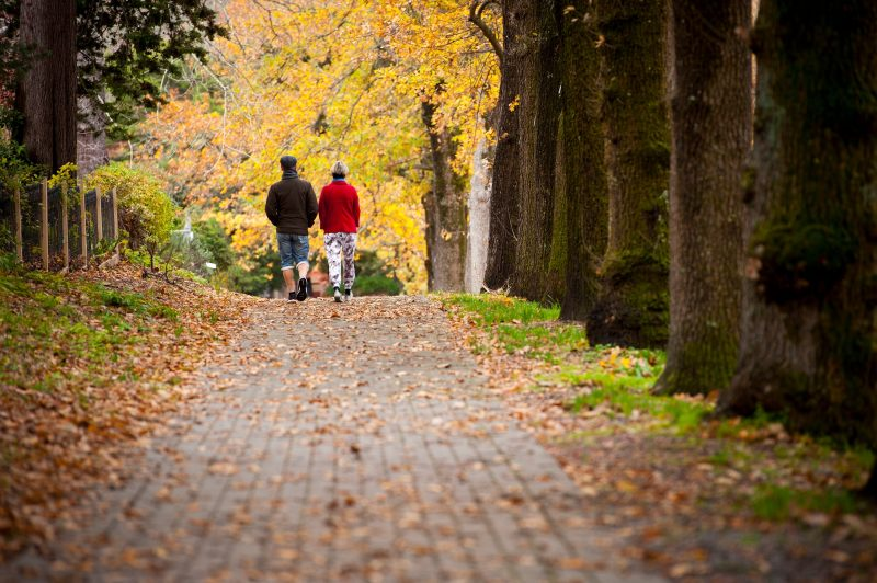 Couple walking along paved footpath lined with trees in autumn colours