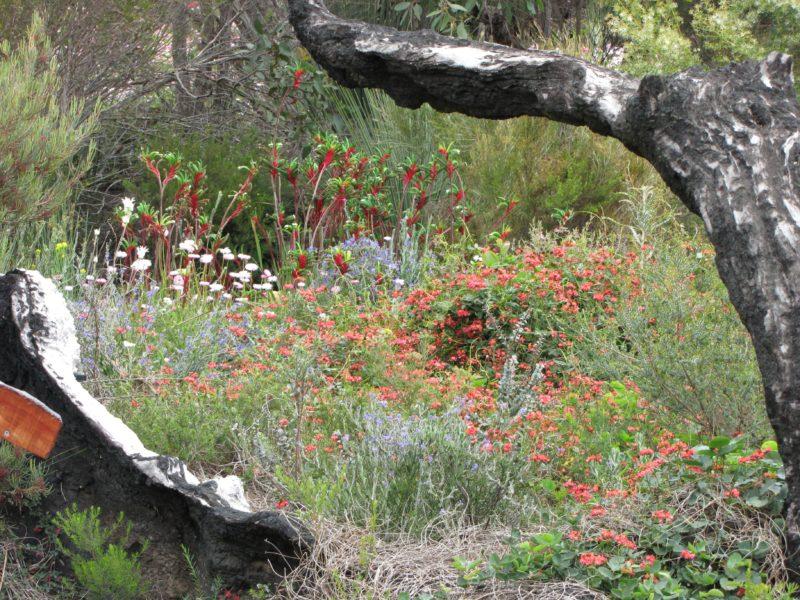Stokes Bay Bush Garden