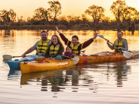 Our daily Sunset Tours take you into pristine creeks and lagoons to enjoy the sunset colours