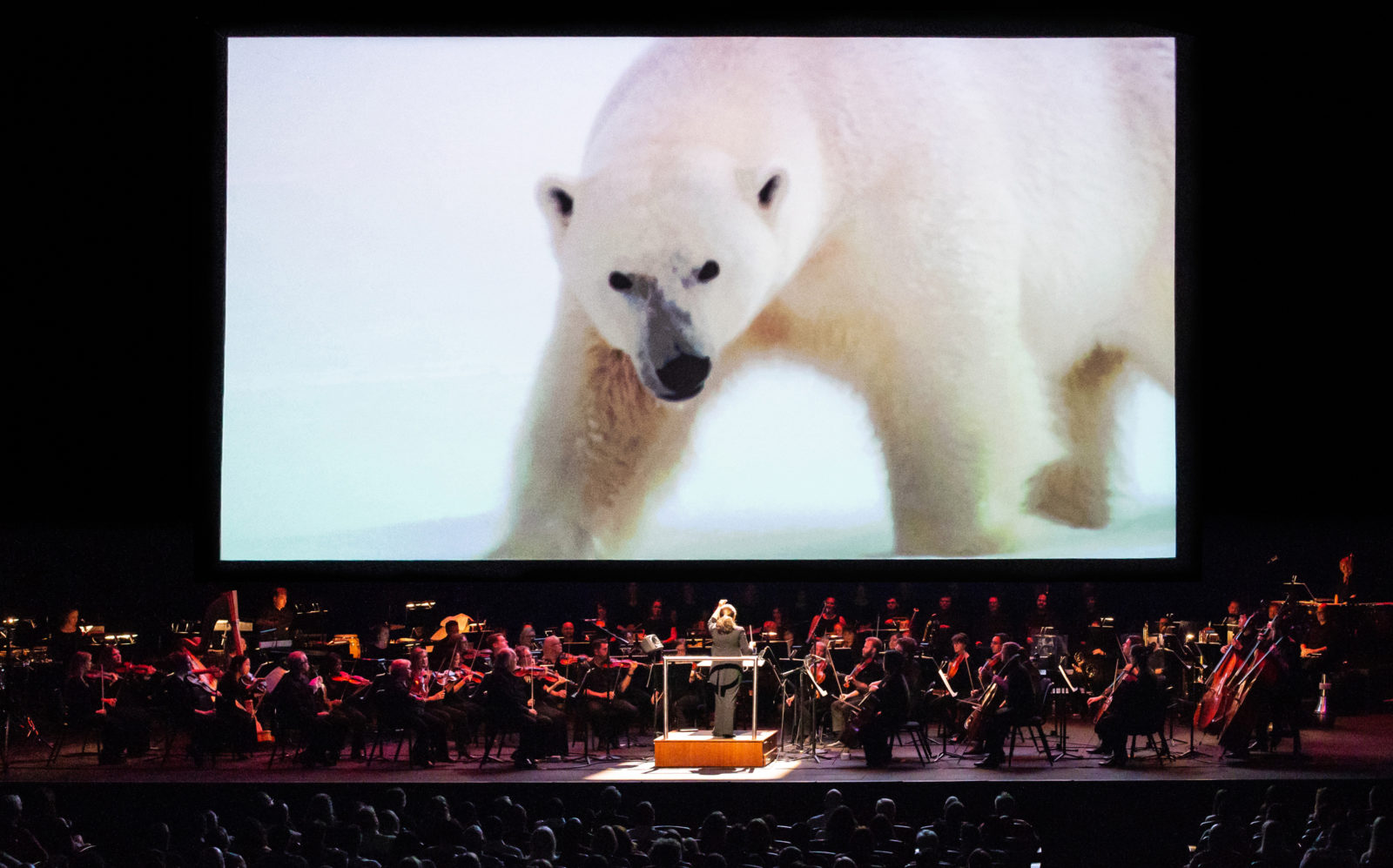 An image of a panda is on the screen that hangs over a live orchestra