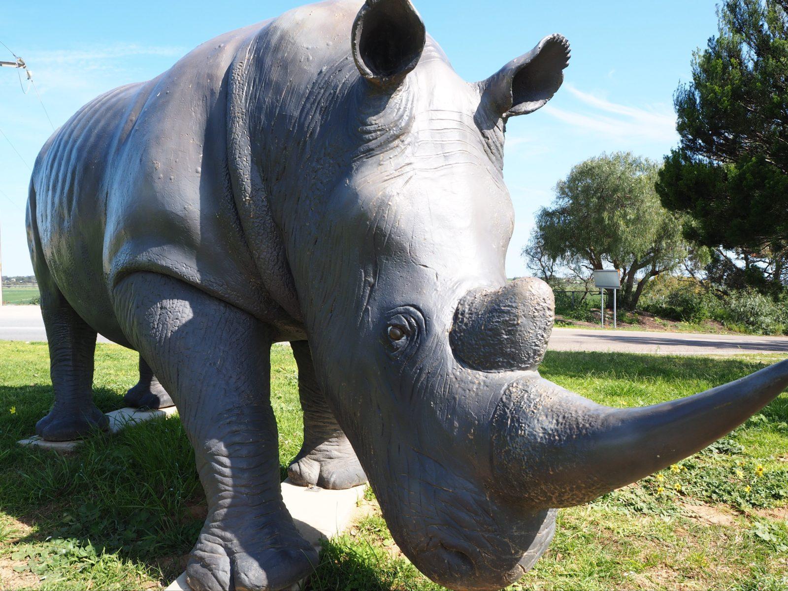Cosi's Rhino Tailem Bend