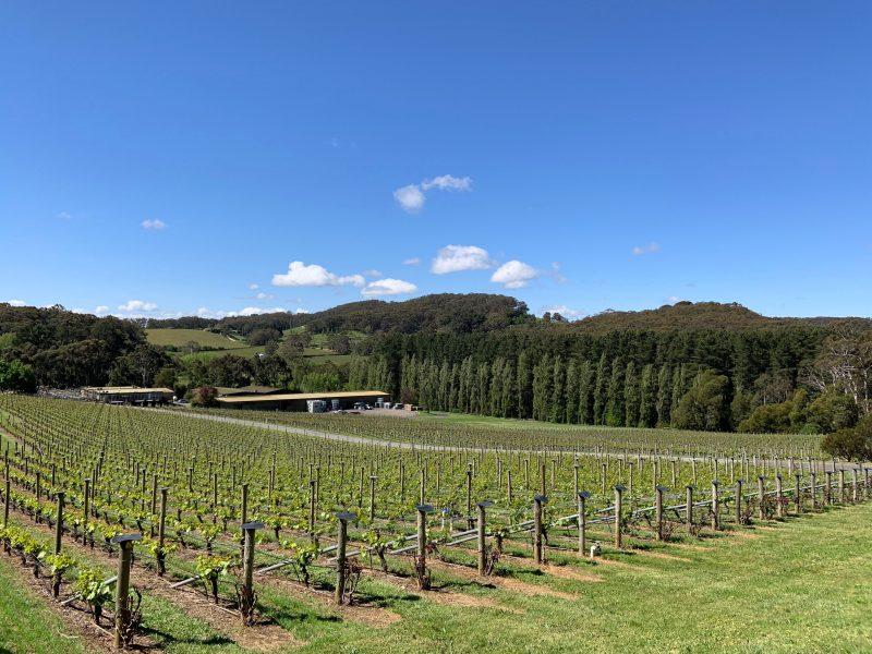A view through the vineyard to the cellar door