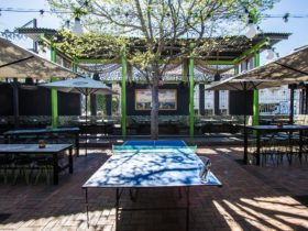 alma beer garden