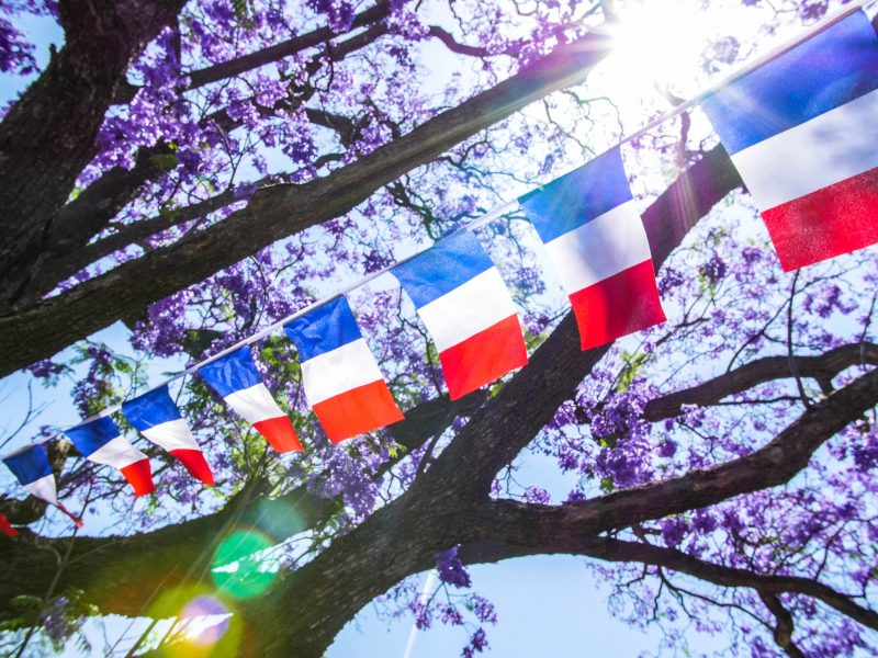French flags flying against a backdrop of jacarandas in flower