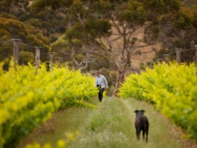 Jacques Lurton at The Islander Estate Vineyards
