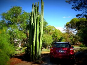 Cactus in the Driveway