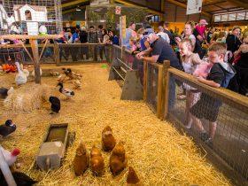 Farmyard Nursery