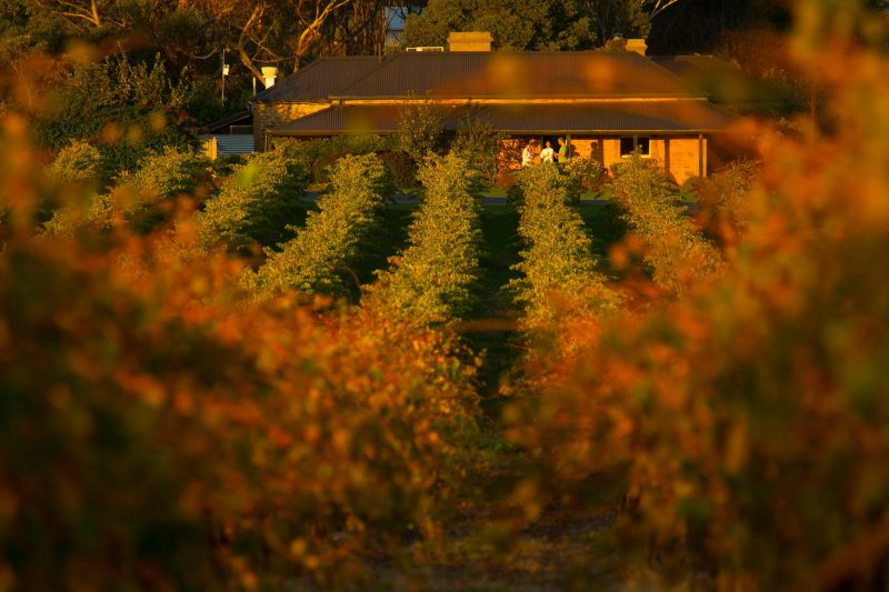 A view of the front of the restaurant through the vines