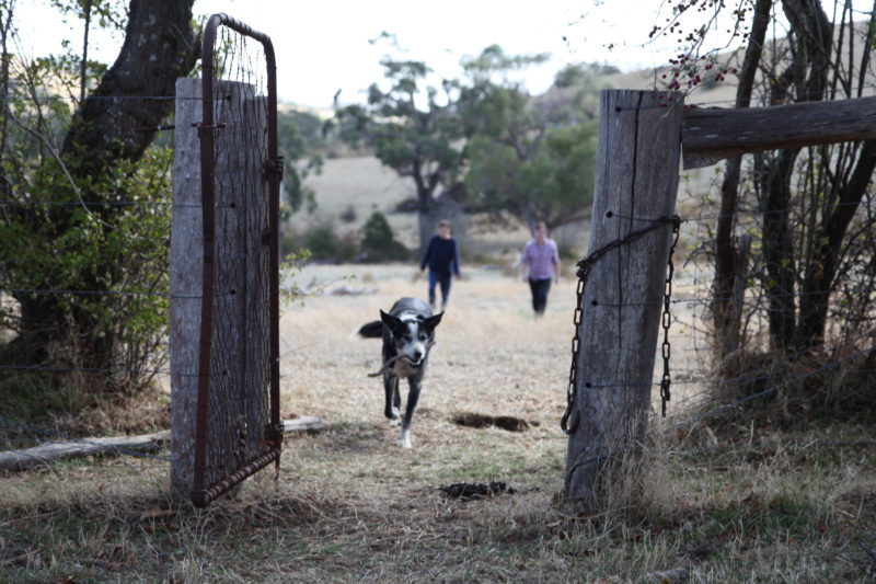 A dog trots through an open gate, stick in mouth, and two people follow behind
