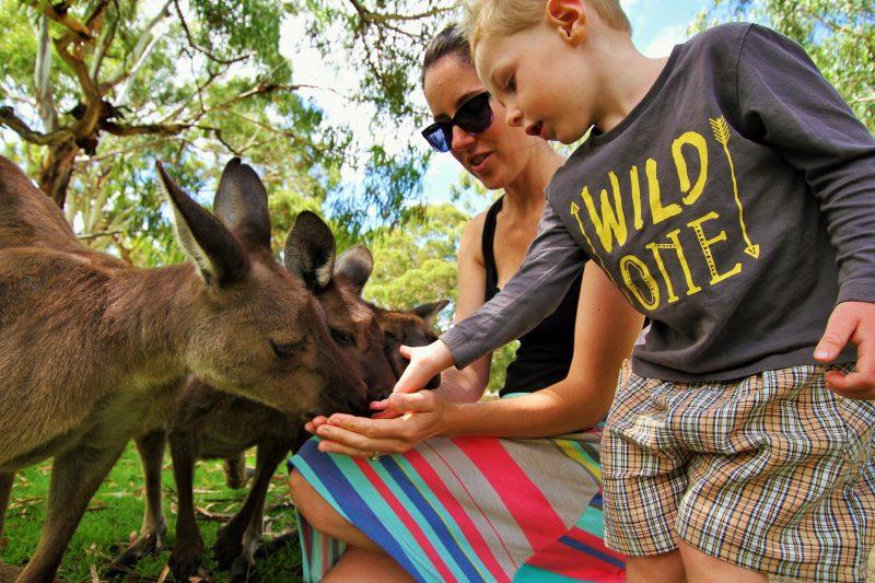 je kangaroo