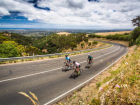 Cycling through the Adelaide Hills. Guided Rides and support car.