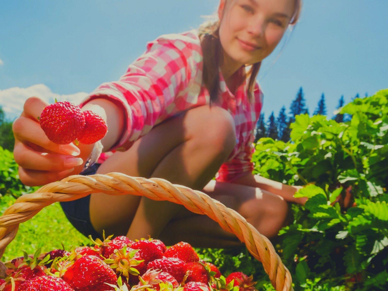 Hahndorf-Strawberries