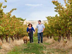 Walking in our vineyards