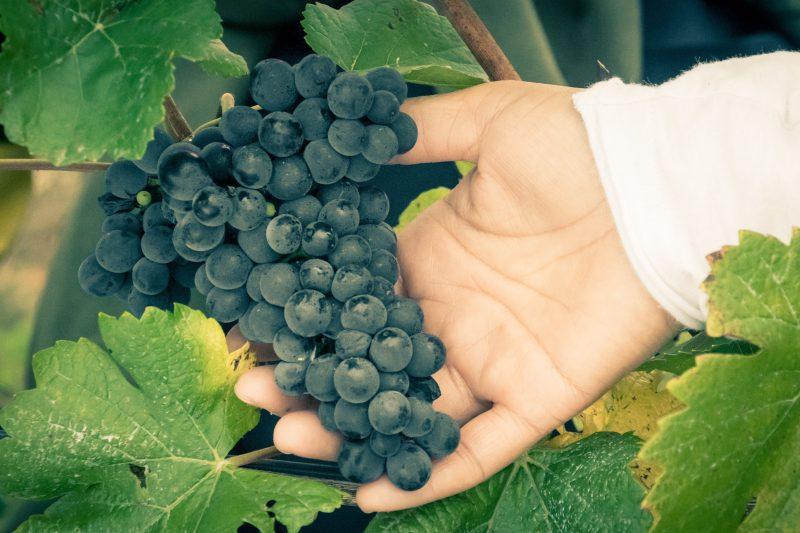 Whisson Lake Pinot Noir