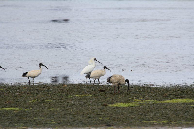 Adelaide International Bird Sanctuary