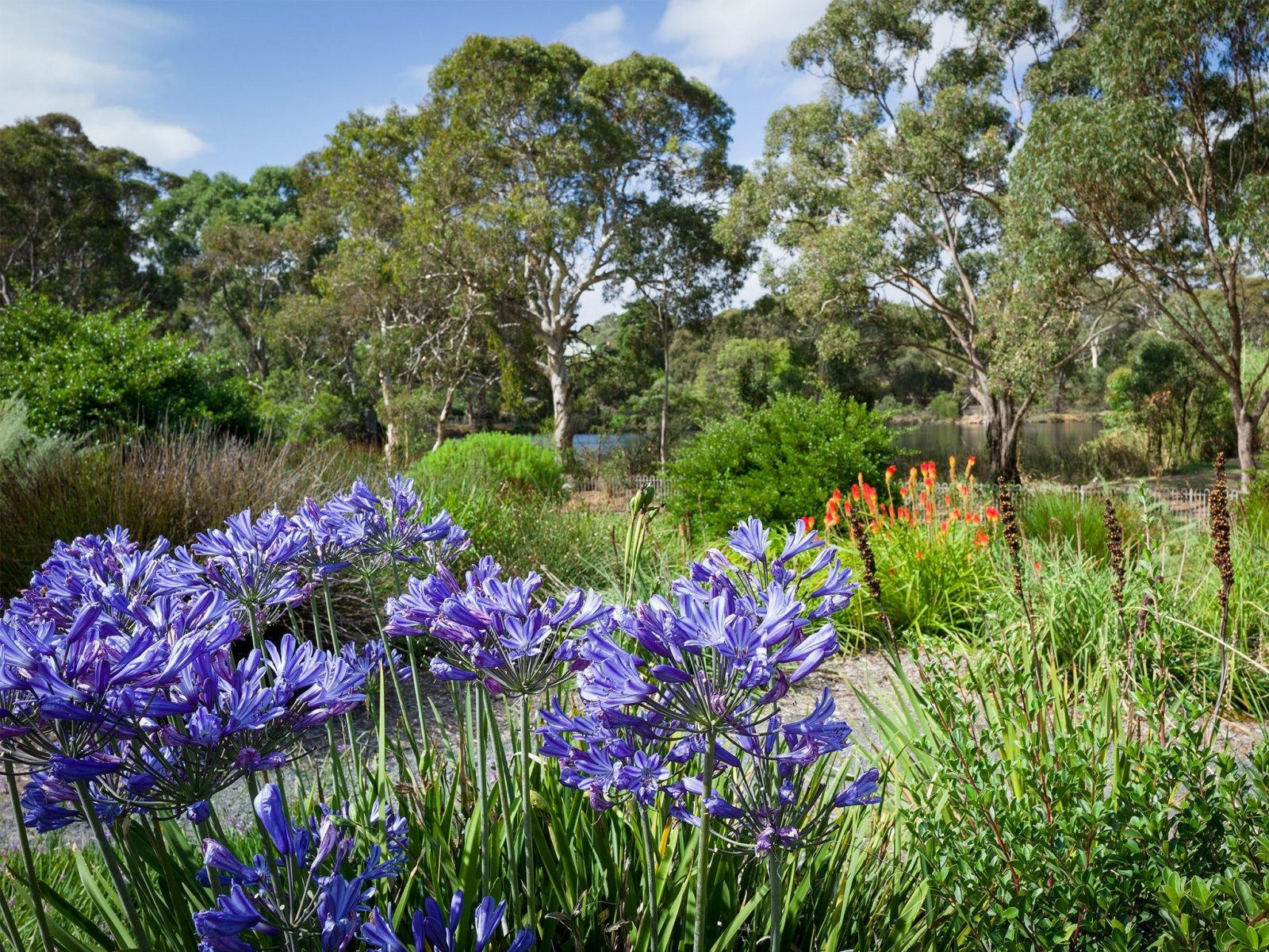 Wittunga Botanic Garden displays water-wise plants from Australia and South Africa.