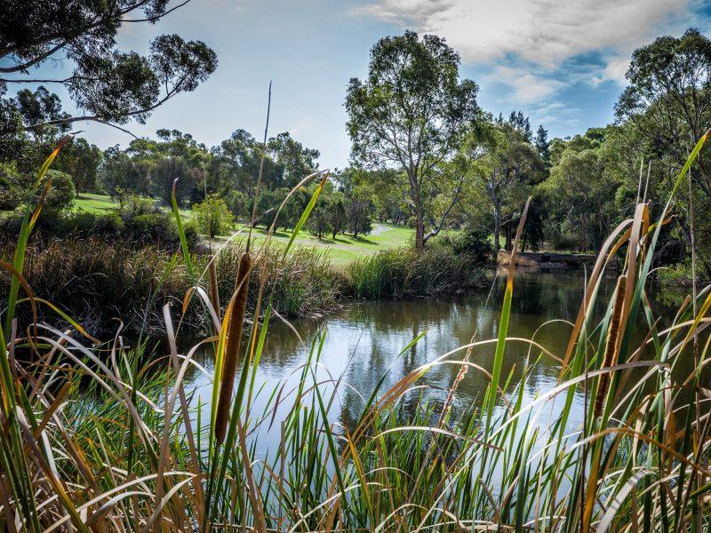 Wittunga Botanic Garden was established as a formal English Garden by Edwin Ashby in 1902.