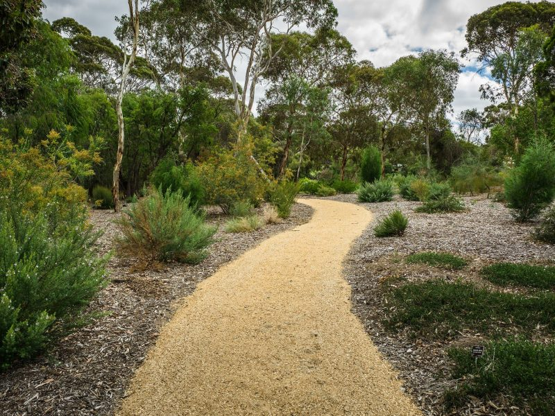 Join a free guided walk at Wittunga Botanic Garden every Tuesday.