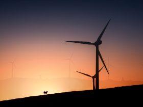Windfarm Tourist Drive Sunset