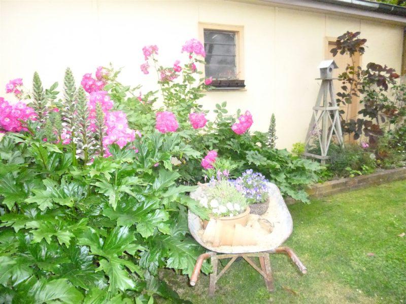 Aggie's garden