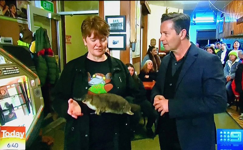 All Things Wild At Burnie's Vivienne Briggs talking on platypus for Channel 9s Today Show recently