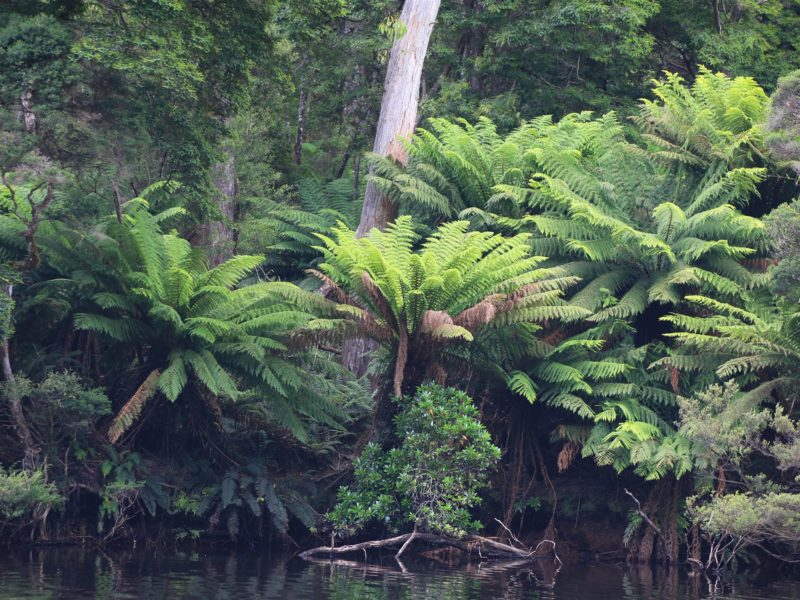 Ancient ferns and reflections