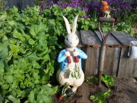 Peter Rabbit eating radishes, with a sparrow on the shovel handle