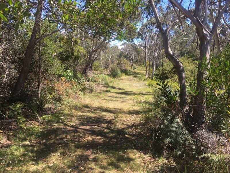 Wide and level track through bushland on Tasmania's north-east coast.