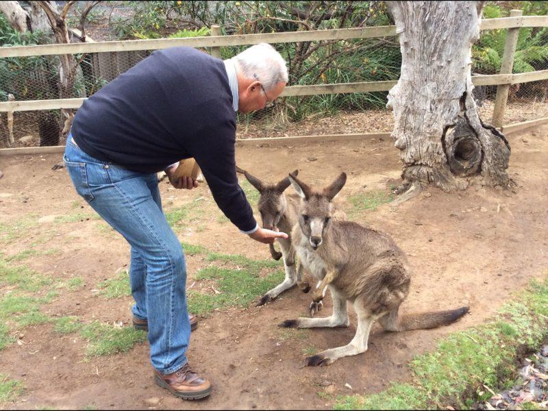 Friendly Kangaroos