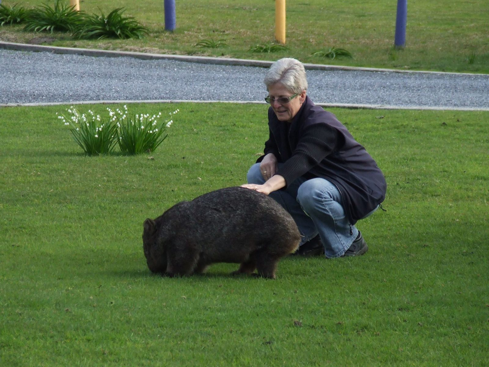 Wombats at BIG4 Kelso Sands Holiday Park