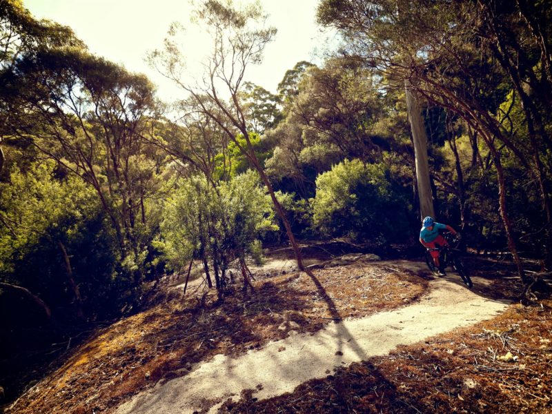 BlueDerby MTB Trails, North East Tasmania