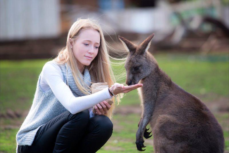 Woman hand feeding a kangaroo at Bonorong Wildlife Sanctuary
