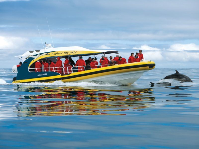 Bruny Island Cruises yellow boats
