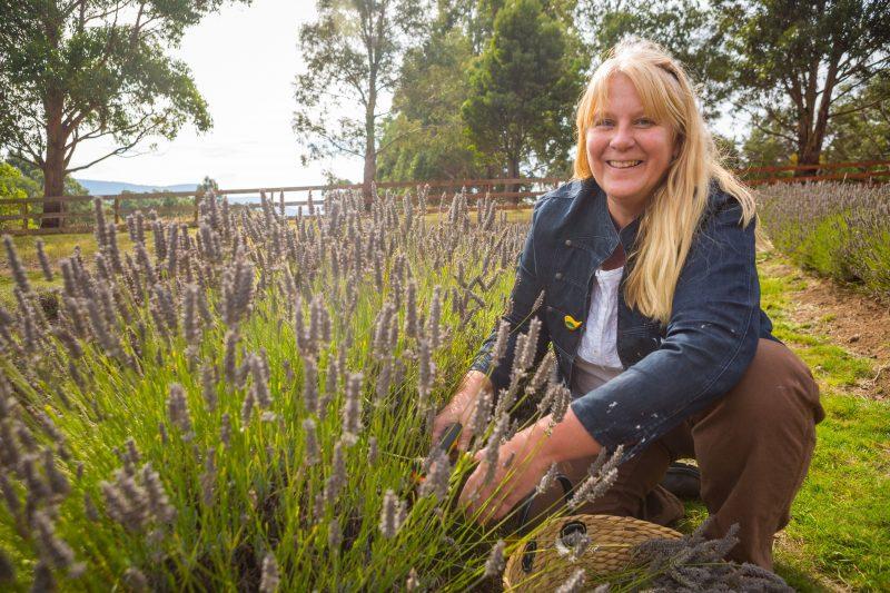 Lisa In campo de flori lavender field