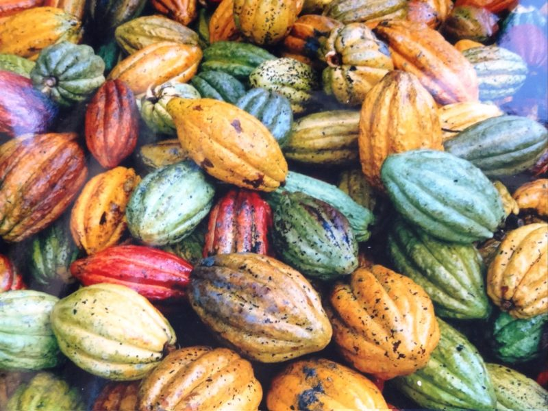 The colours or cacao pods