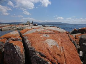 Orange lichen on rocks at the Bay Of Fires