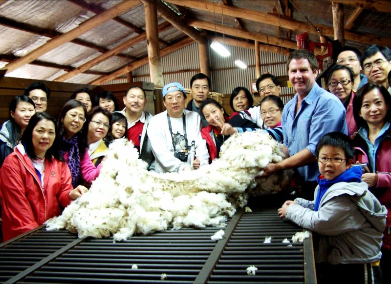 Touching the wool