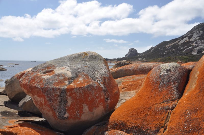 Lichen on granite rocks Flinders Island Tasmania