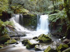 Horse Shoe Falls Mt Field National Park