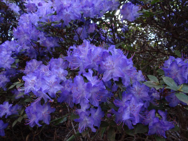 peak flowering EVRG