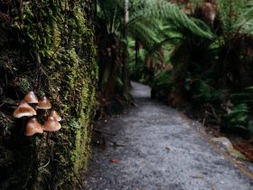 Fungi growing along Fern Glade track