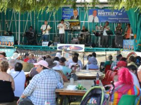 """Band """"Nine Lives"""" plays beneath green trees for a seated crowd who are enjoying food and beverages."""
