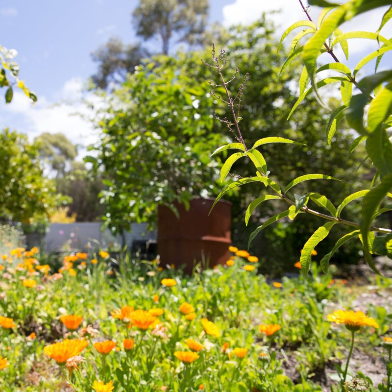 The garden at Flinders Island Gourmet Retreat